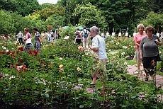 festiwal róż